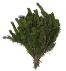 Lodgepole Pine  ::  28 - 32 in. long - 3 lb. bunch / 15 per carton