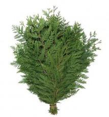 Western Red Cedar :: 28 - 32 in. long - 3 lb. bunch - 15 per carton