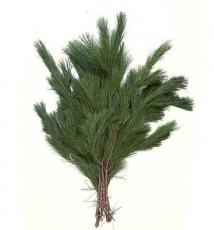 White Pine :: 28 - 32 in. long - 3 lb. bunch - 15 per carton