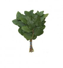 Baby Salal :: 14 - 16 in. long - 18 stems per bunch - 25 per carton