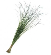 Bear Grass :: 28 - 32 in. long - 40 per carton