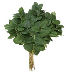 Long Salal :: 24 - 26 in. long - 1.5 lb. bunch - 20 per carton