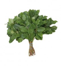 Salal Tip :: 18 - 20 in. long - .75 lb. bunch - 25 per carton