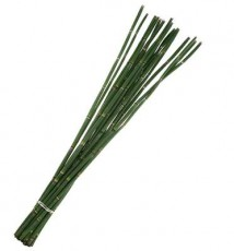 Rush (Snakegrass) :: 29 - 31 in. long - 20 stems/bunch - 30 per carton
